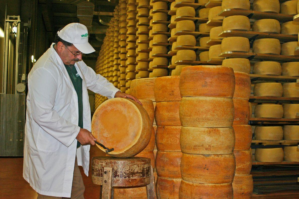 picchiettatura Formaggio Piemonte