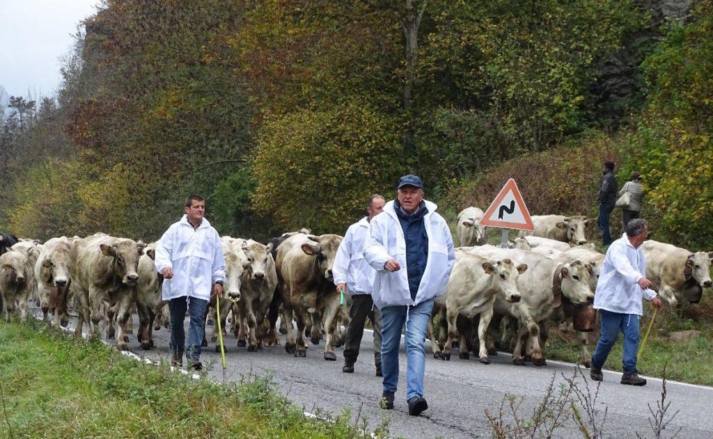 """Un'immagine dell'iniziativa """"Caluma el vache. Il ritorno della mandria a valle"""" organizzata da Confagricoltura lo scorso ottobre"""